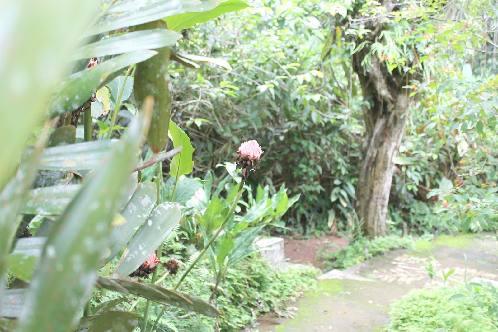 Sri Lanka diaries, part two