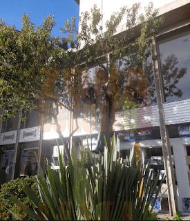 Biblioteca Luis Ángel Arango 2