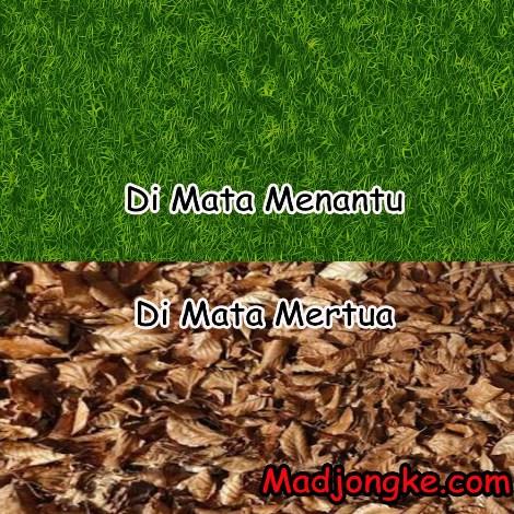 halaman kotor dimata mertua vs dimata menantu