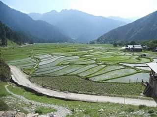 pertanian di wilayah Kashmir