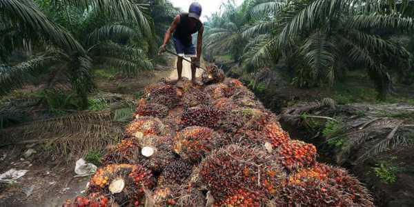 Realisasi Kegiatan PT Nabire Baru untuk Rakyat Kabupaten Nabire, Papua