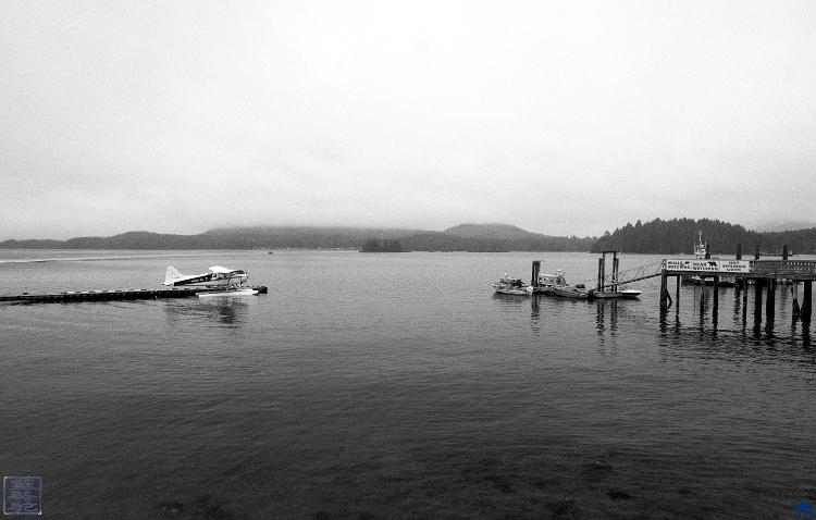 Le Chameau Bleu - Baie de Tofino  Ile de Vancouver Colombie britannique