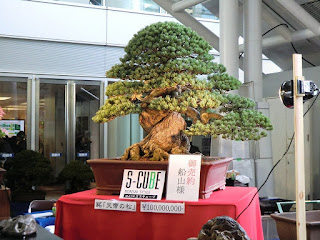 The Most Expensive Bonsai in the World
