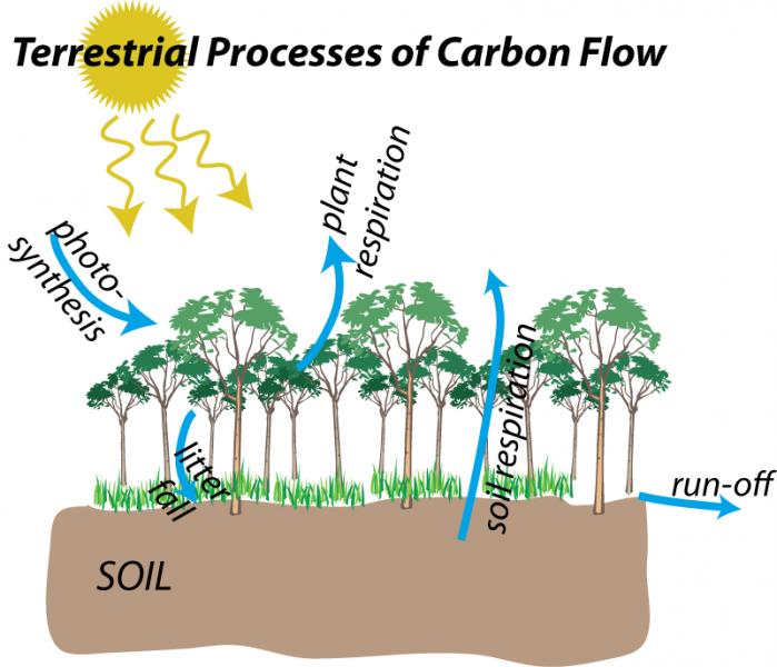 Carbon Land  Soil Organic Matter  U2013 Decomposition Rates