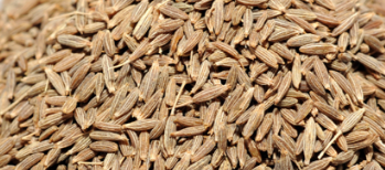 Cumin Seeds / Jeera Improves Milk Production in Mothers