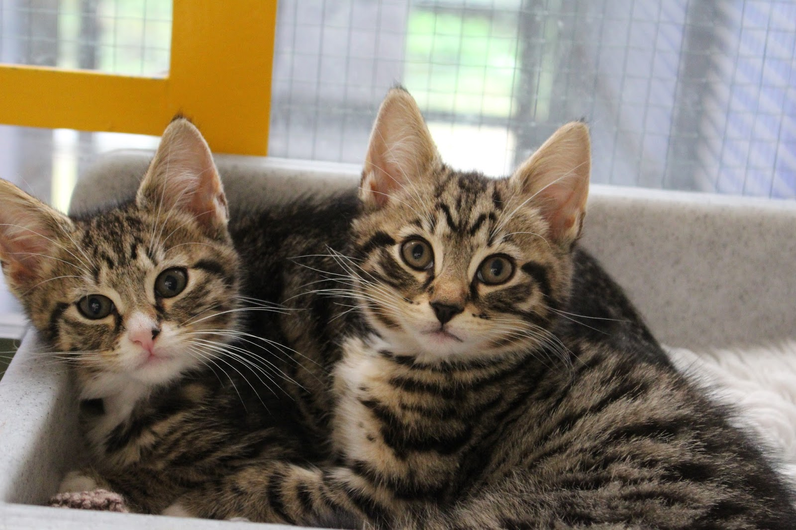 Cats Protection - Exeter Axhayes Adoption Centre: Vaccinations