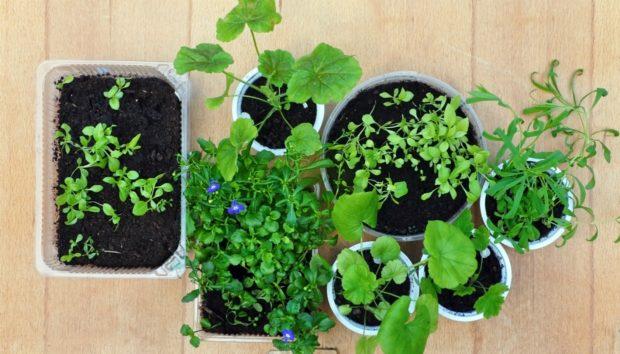 Αυτά Είναι Τα Φυτά Που Δεν Θέλουν Καθόλου Πότισμα