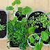 Αυτά Είναι Τα Φυτά Που Δεν Θέλουν Καθόλου Πότισμα!