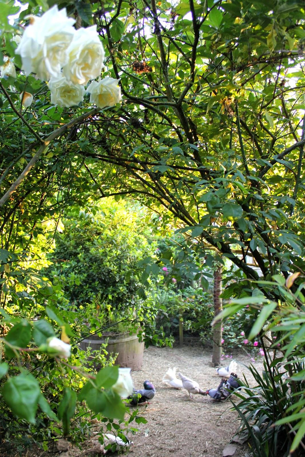 Rose arch in a forest garden