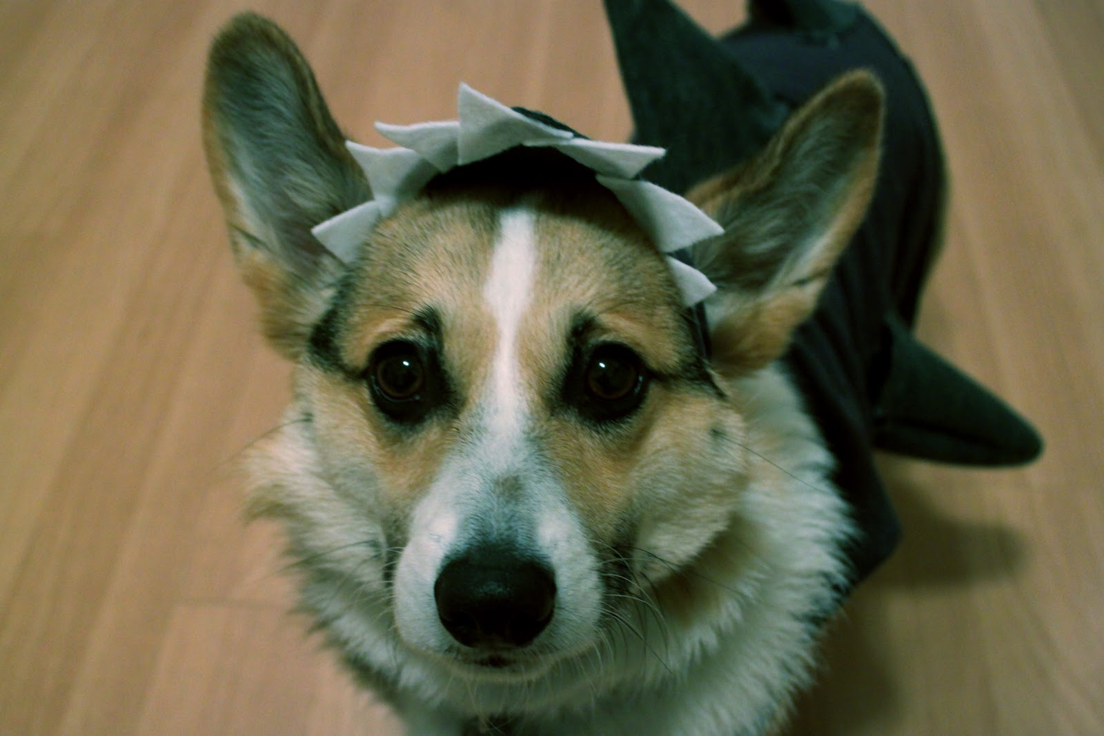 rouge & whimsy: (easy + cheap) DIY dog costume