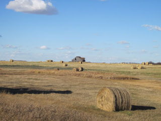Field of Rolled Hay.