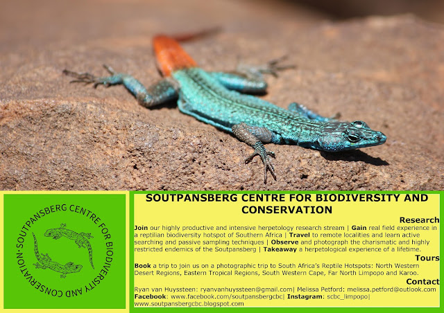 Reptile Research South Africa