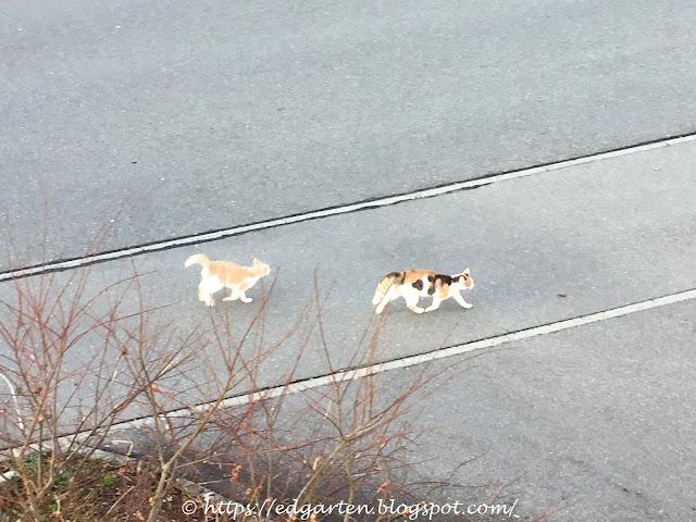 Katzenpaar Muffin und Babuschka