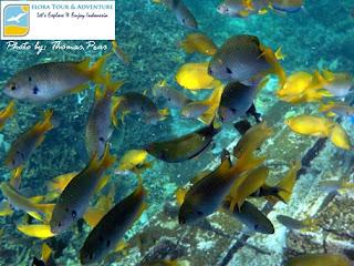 spot snorkeling taman laut pahawang