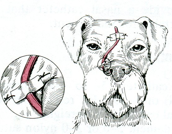 Veterinary Key Points: Decompression of the massively