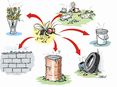 andariki-ayurvedam-dengue-source