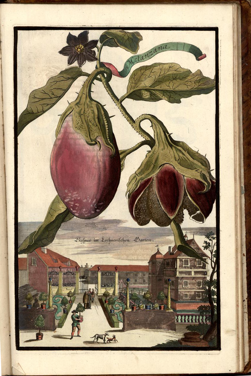 The Promise of Seeds: Magic in a Packet: 1887 - Egg-Plant to Evening ...