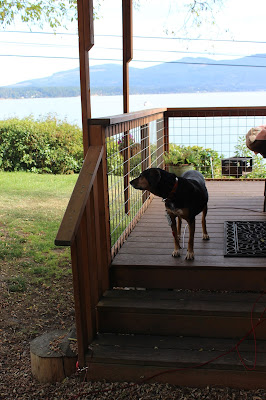 Dog Friendly Sequim Washington