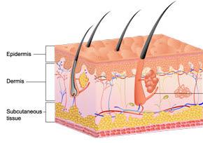 أهمية الجلد للجسم skin