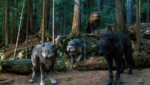 Twilight Pack  Werewol...