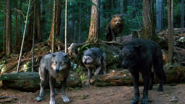 jacob black werewolf transformation - photo #37
