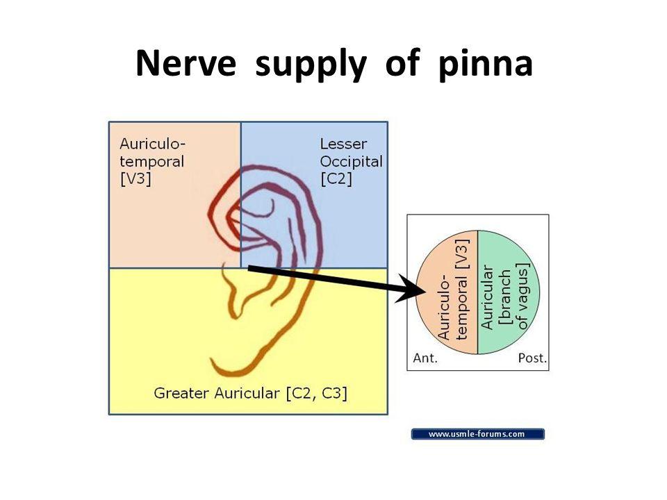 Ent Notes Pinna Anatomy
