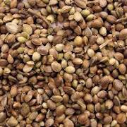Китайские археологи обнаружили семена, которым более 2 000 лет