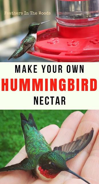 Hummingbirds at feeder and in hand. Feeding hummingbirds.