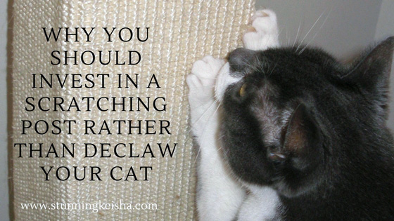Why You Should Invest in a Scratching Post Rather Than Declaw Your Cat #ChewyInfluencer
