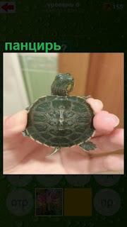 в руках находится черепаха панцирем вверх, только конечности торчат