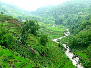 Sapa, Vietnam, rice paddy, rice terrace, rizière