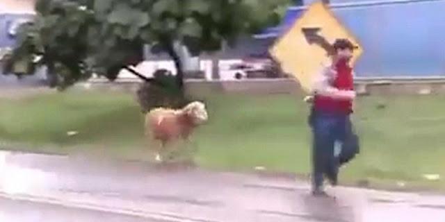 #شاهد خروف يقتل رجل عجوز في فرنسا بطريقة غريبه والشرطه تحتار في امره !!