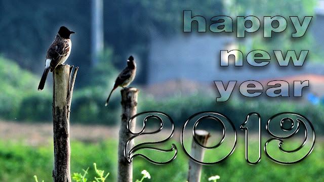 Happy new year 2019 whatsapp status | Happy New Year images 2019, #aim2photography