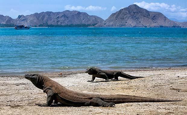 Pulau Komodo, Destinasi Wisata Indonesia yang Mendunia