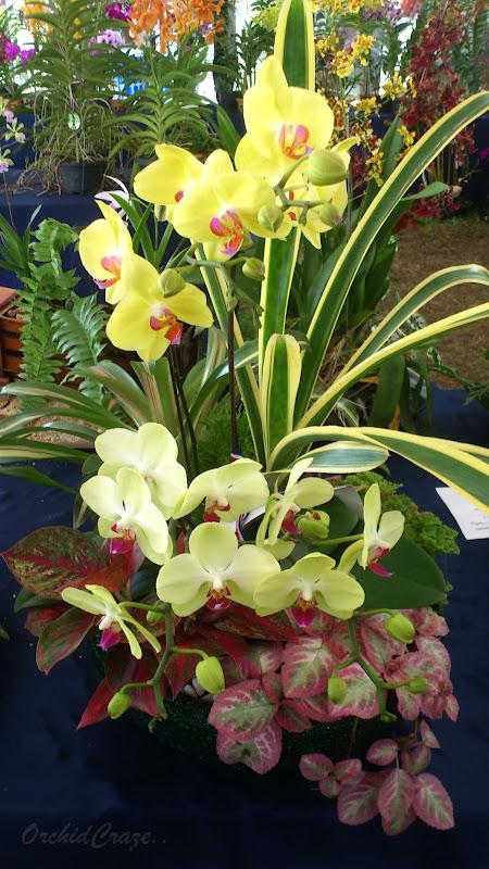 OrchidCraze June 2012