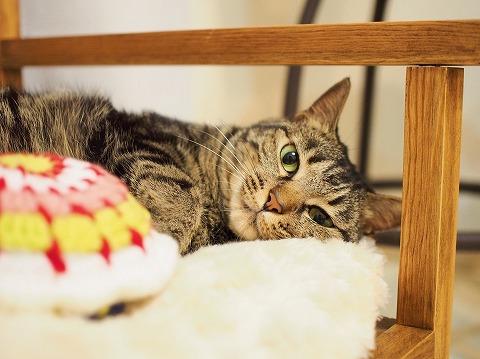 ベンチで横になってるキジトラ猫