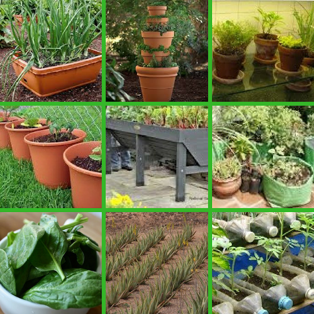 Types of pots used in kitchen garden from the out of box farmer