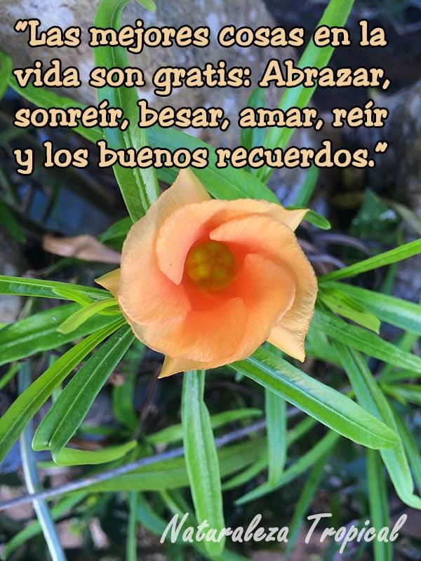 Consejos para una vida sin preocupaciones, flor tropical preciosa.