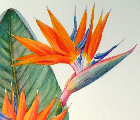 Bird Of Paradise Botanical Painting Strelitzia Reginae