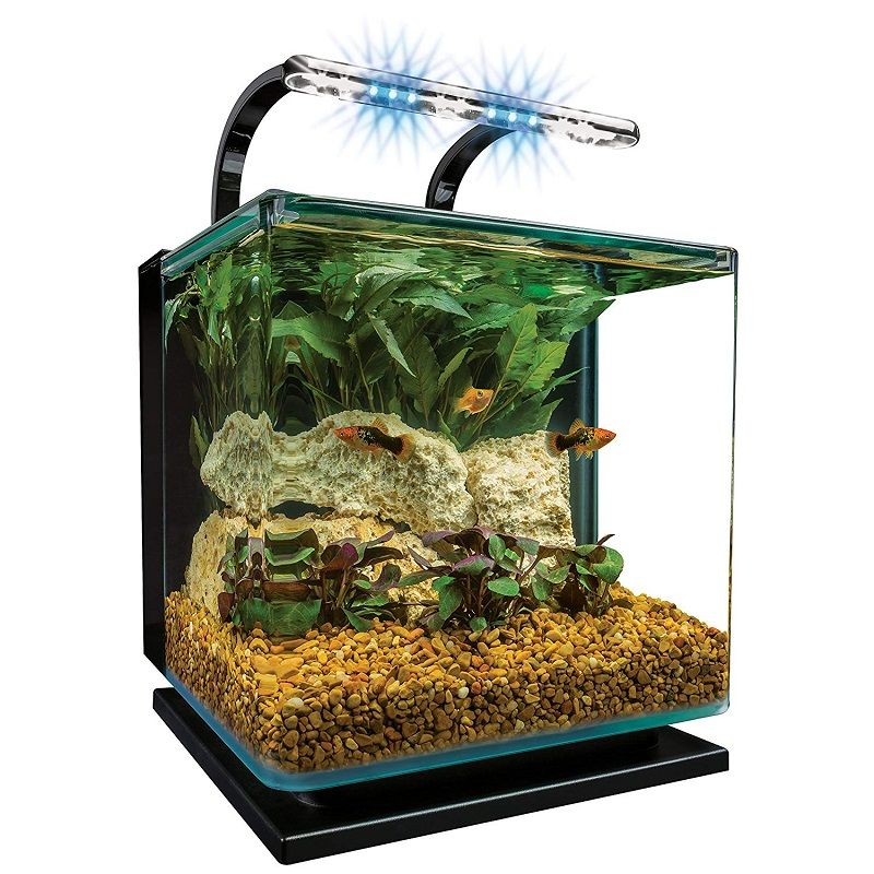 Betta Fish Tank Size - MarineLand Contour Glass Aquarium Kit With Rail Light