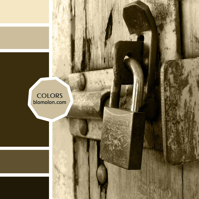 variedad_en_color_moodboards_1c