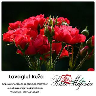 Idealna za Vaš kutak, za uživanje i odmor.  ~ Lavaglut Ruža ~