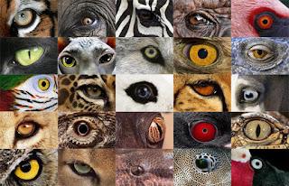 ADIVINA ADIVINANZA, ¿DE QUÉ ANIMAL SE TRATA?