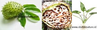 Obat-Kanker-Dari-Tanaman-Herbal-Ampuh.jp