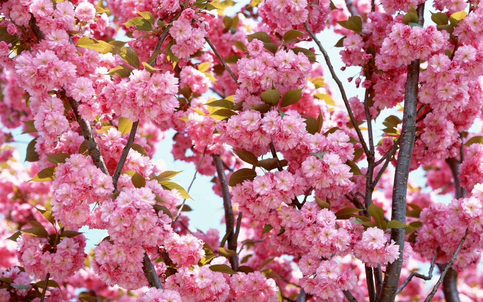 Floral Wallpaper Phone Tropical