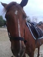 équitation, jument