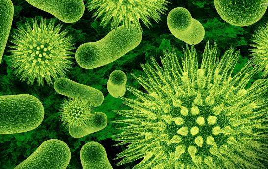 Bakteri gigi kursi hp toilet