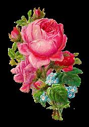 rose digital flower botanical clip pink printable clipart shabby chic scrapbooking bouquet artwork scrapbook illustration