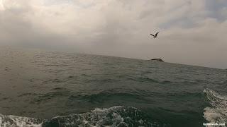 Gaivota sobrevoando o mar de Búzios/RJ.