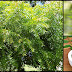 Health Benefits and Medicinal Uses Of Neem You Need To Know